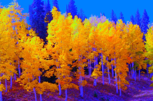 Steamboat Springs Fall